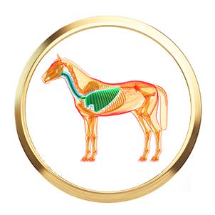 atmung-pferd