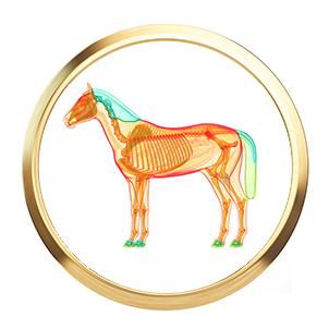 fell-haare-pferdefutter