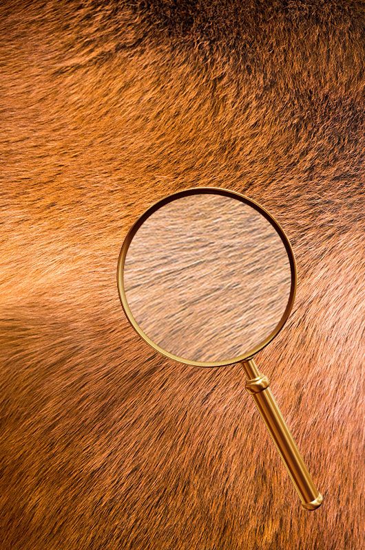 Haar-Analyse beim Pferd