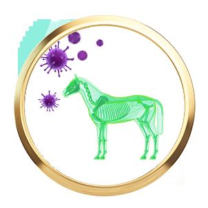 immunsystem-abwehkraefte