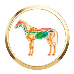 magen-darm-pferd